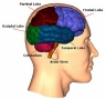 brain_diagram.jpg
